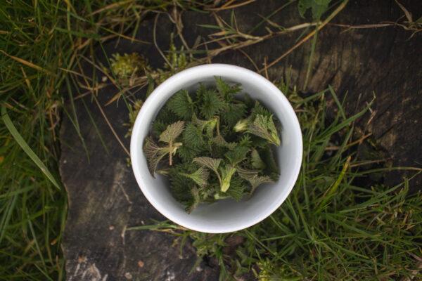 Lav te af brændenælder