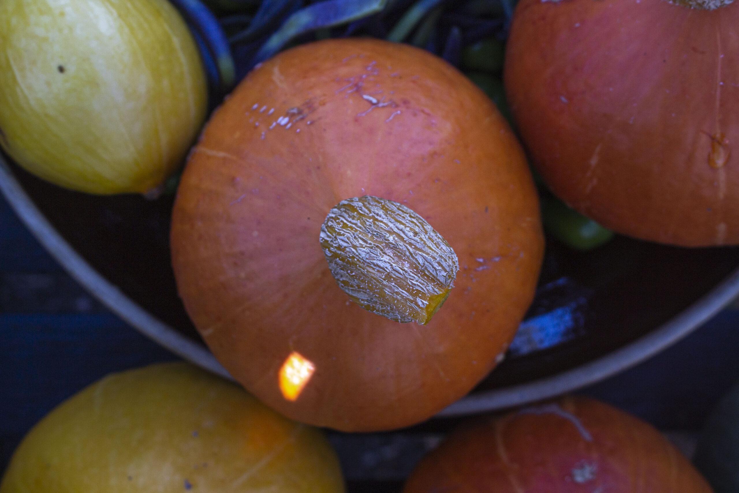 Opbevaring af grøntsager om vinteren