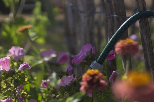 Få flere mariehøns i haven
