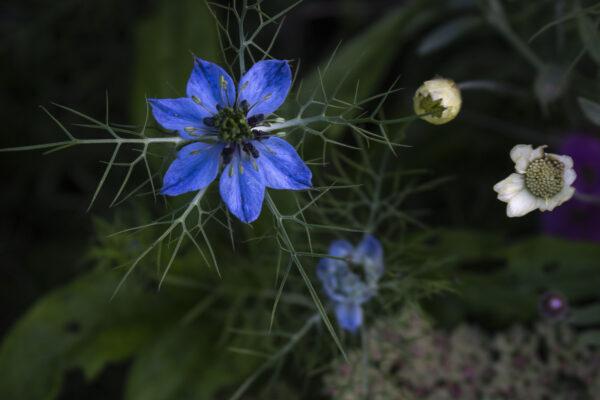 Inspiration 32 spiselige blomster
