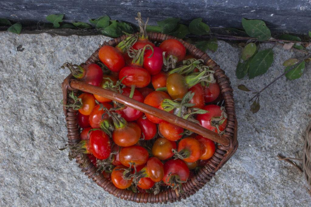 Vær sikker før du sanker vilde urter i sæson